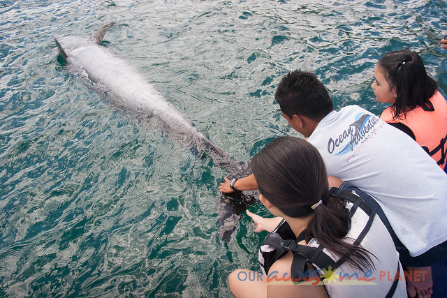 Swim Encounter with Dolphin-68.jpg