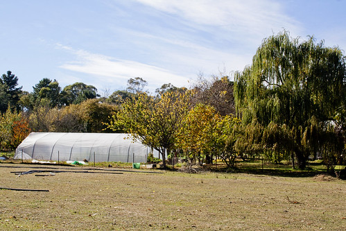 Photo of the polytunnel and garden where the fresh food is grown