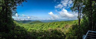 Sassafras Panorama