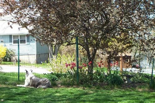 Em and tulips