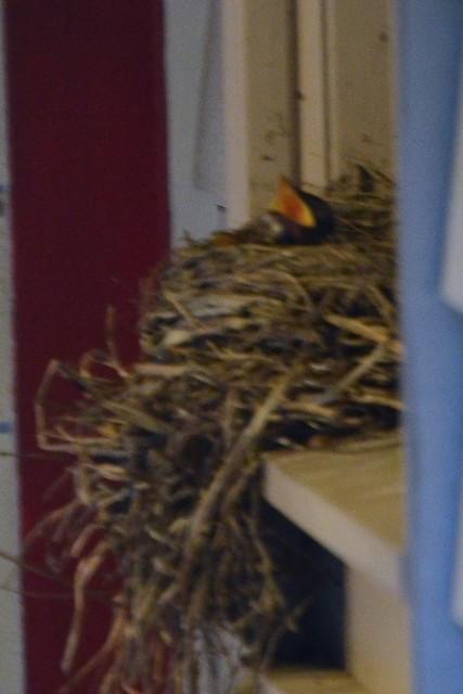 Baby Birds (Side)