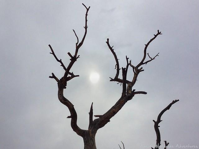 Moon in Tree