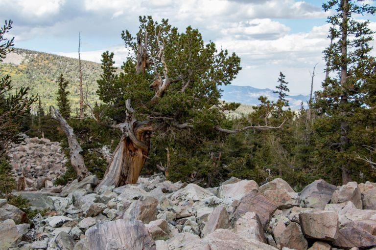 09.04. Great Basin National Park