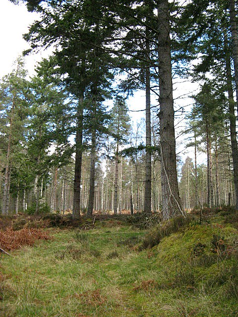 Darroch Woods, Dores to  Aldourie run