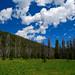 Sawtooth Meadow