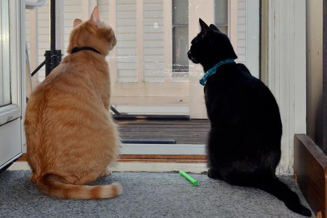 Beso & Luna in the Window