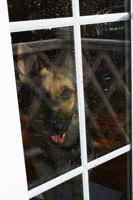 Watching me through the window