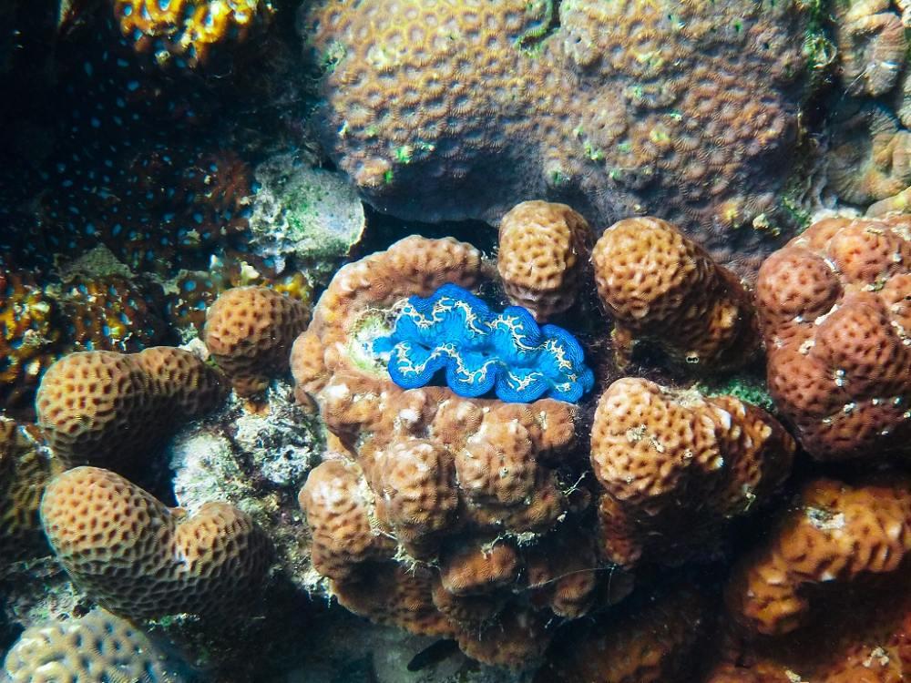 Eric的攝影世界 – 帛琉浮潛