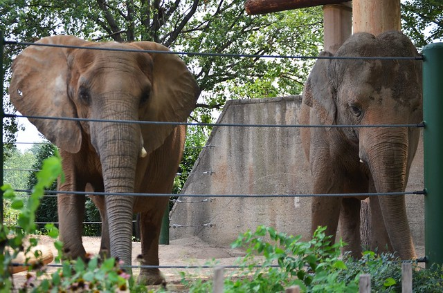 Two Continents of Elephants