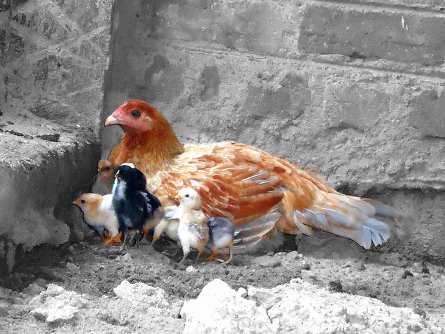 Mom, Children Affection
