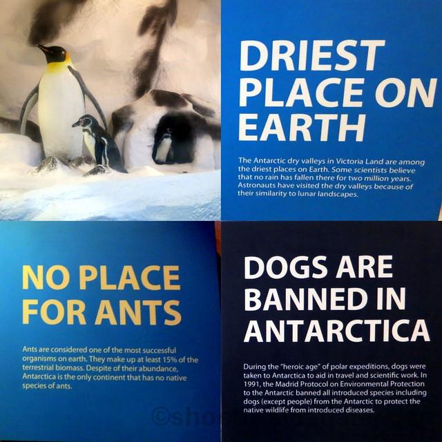 Manila Ocean Park's Antartica-001