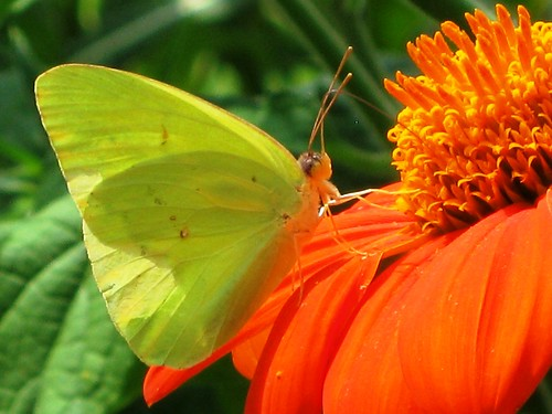 Winged Yellow on Orange by Rosa Blue