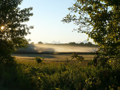 Foggy morning off Miller Road