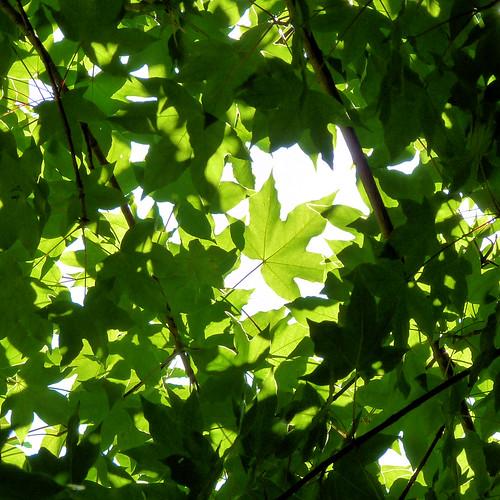 unter Bäumen VI