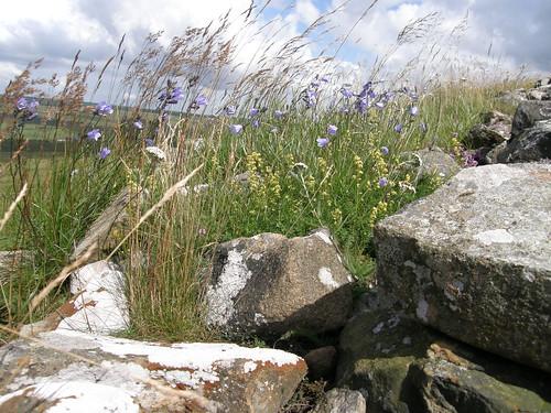 Walltop garden