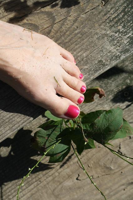 dewy toes