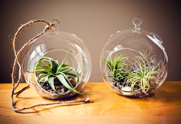 Two Tillandsia Air Plant Glass Globe Terrariums on Table with Rope