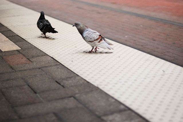 railway birds