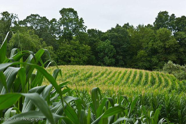 2012_Jul_20_Corn Field_014