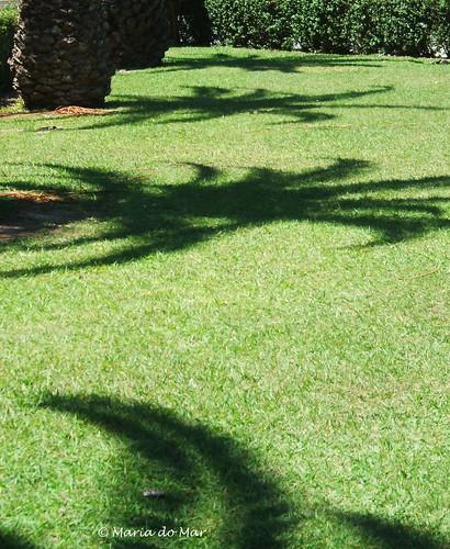 Árvores - sombras - 2012jpg by lusografias