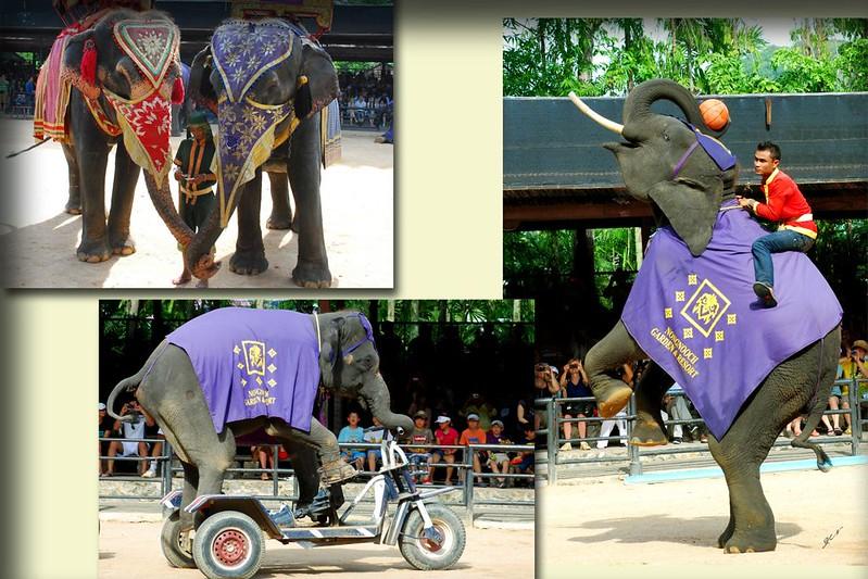 大象表演3