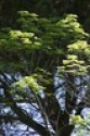 Photo Challenge: 226/366 Tree in Light & Shadow