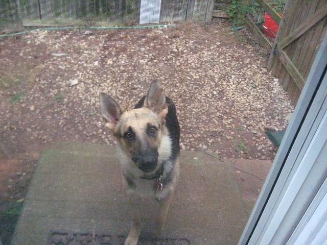 Please, let me in.