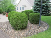 Top 28+ - Bushes For Front Yard - 101 front yard garden ...