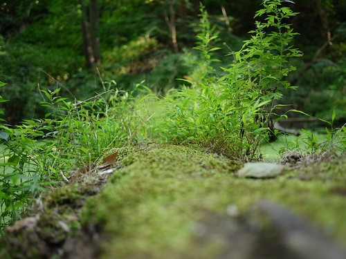 tiny fairy forest on a log in the bog