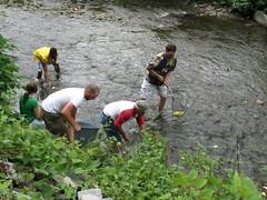 catching ducks