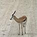 Etosha National Park impressions, Namibia - IMG_3056_CR2_v1