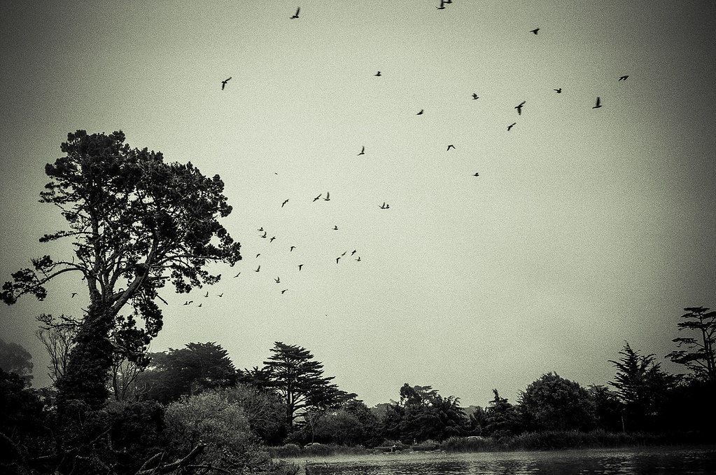 Stow Lake Leica