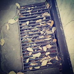 Leaves in the drain