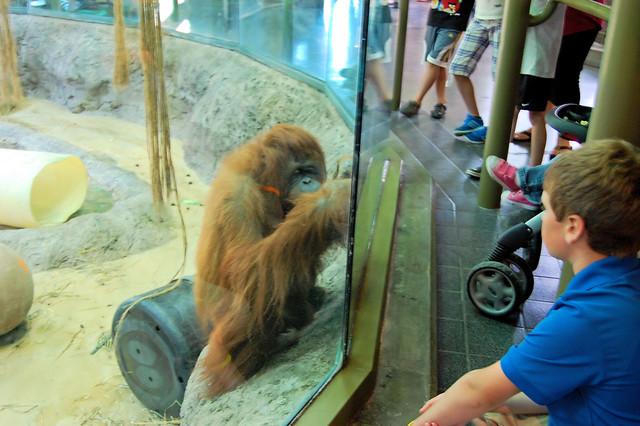 Racine Zoological Gardens, Racine, Wisconsin