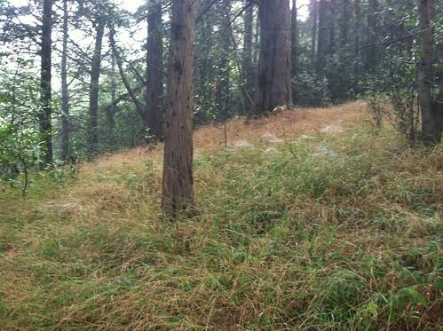 Grasd webs below Big Trees Tr