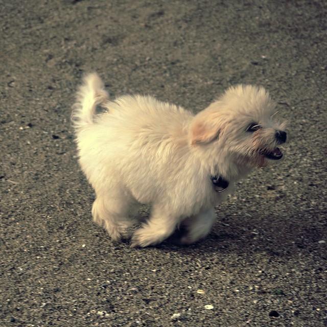 Puppy Crush