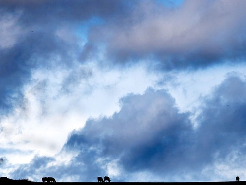 Cows Grazing - The sky as negative space makes a statement about vastness.