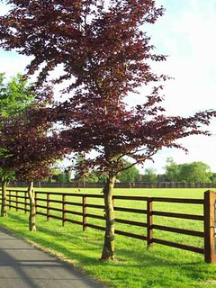 Nice green paddocks behind a sturdy post and rail fence at the Irish National Stud.