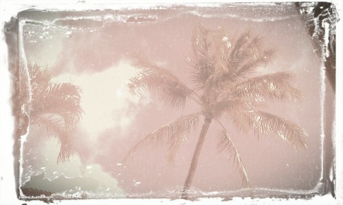 Aloha Palms Antiqued by AbiznessDigital