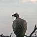 Etosha National Park impressions, Namibia - IMG_3283_CR2_v1