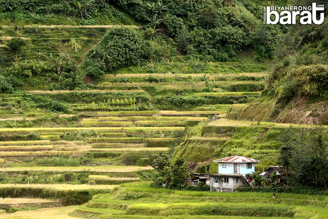 House smacked in the middle of the terraces banaue ifugao
