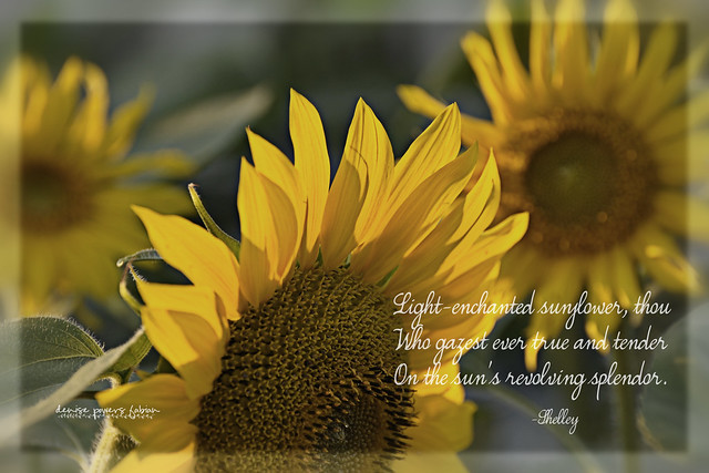 Light-Enchanted