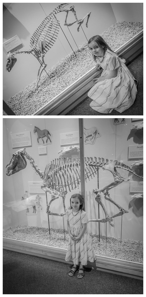 """Molly saw these and ran over. """"I want to take a picture with the PONIES!"""" She didn't once mention that they were, um... fossilized prehistoric pony bones. ;)"""