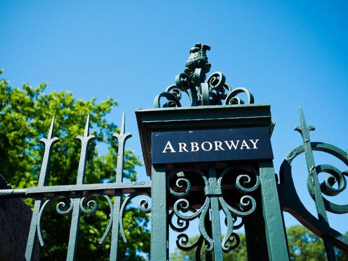 Arnold Arboretum 1