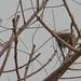 Trees in Nigeria - IMG_2348_CR2_v1