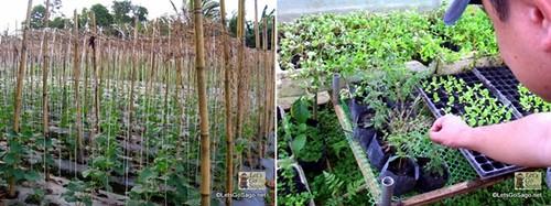 Greens Produce