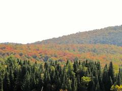 Hillside colours