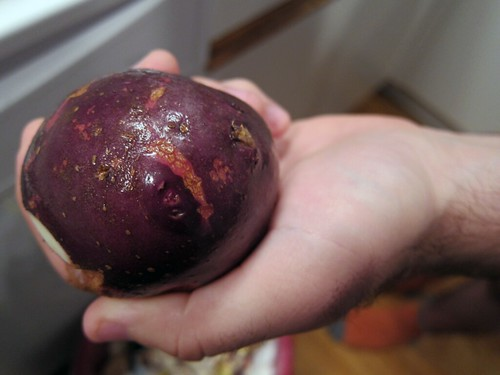Close-up of a hand holding out a unpeeled potato with a deep purple skin.