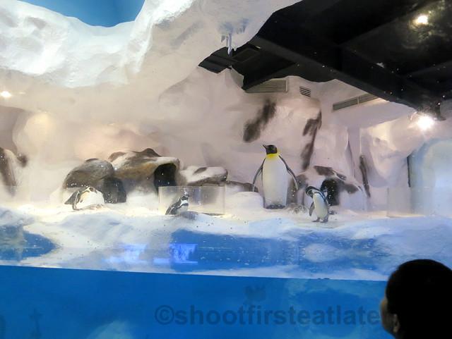 Manila Ocean Park's Antartica- penguins