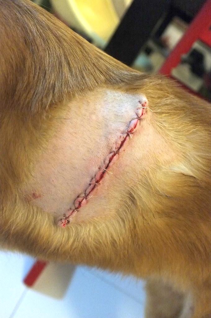 the fresh stitches